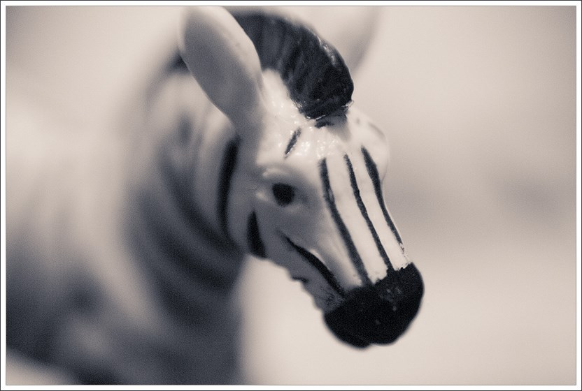 kleines zebra