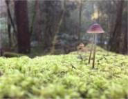 Pilz auf Baum