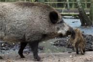 So ein Schwein!