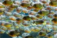 Bissige Zeitgenossen - Aquarium Kopenhagen