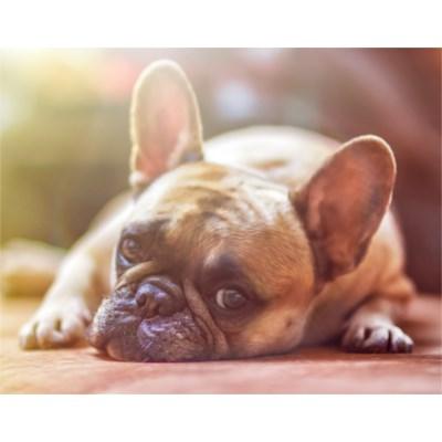Hunde- und Katzenbilder finden: Apple bietet neue API für Foto-Apps
